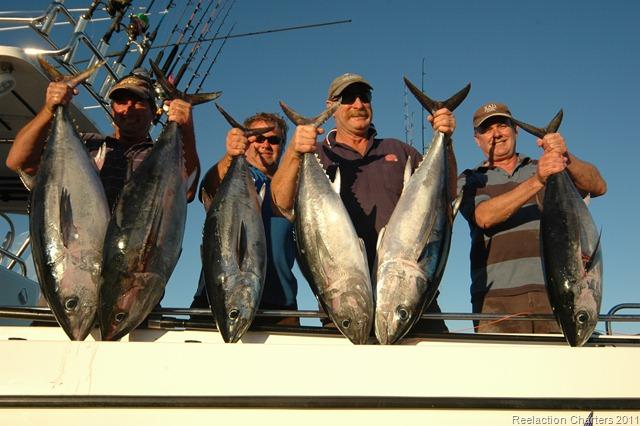Tuna fishing at marion bay yorke peninsula south australia for Reel action fishing charters